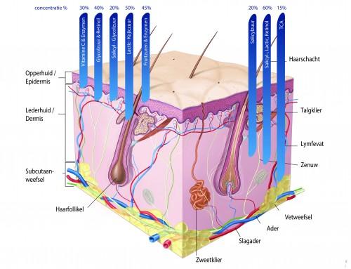 Exfoliëren verbetert de huidconditie
