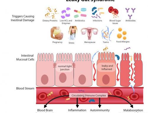 Verhoogd doorlaatbare darmbarrière oorzaak van acne en andere huidproblemen